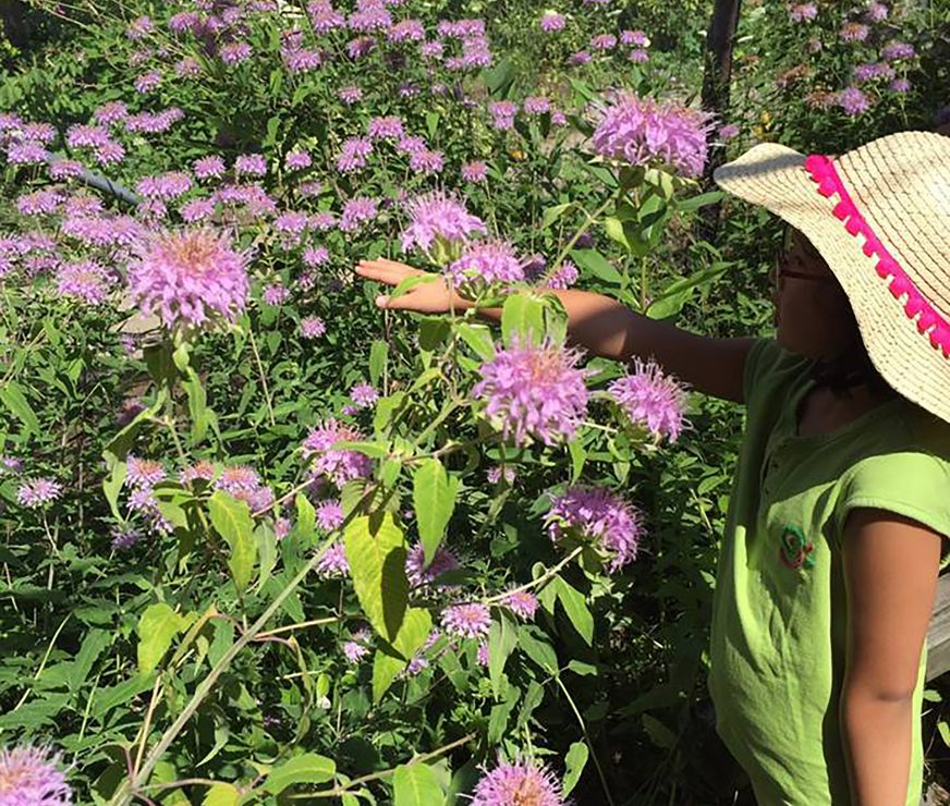 Middle schooler in a sun hat tries to catch a butterfly
